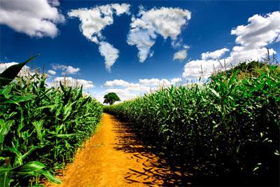 ekologiczne_uprawy